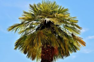 Palm Tree Removal Techniques | The Two Main Palm Tree